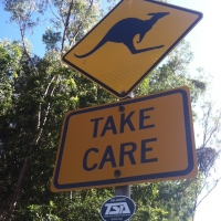 Kangaroo Crossing in Perth, Australia
